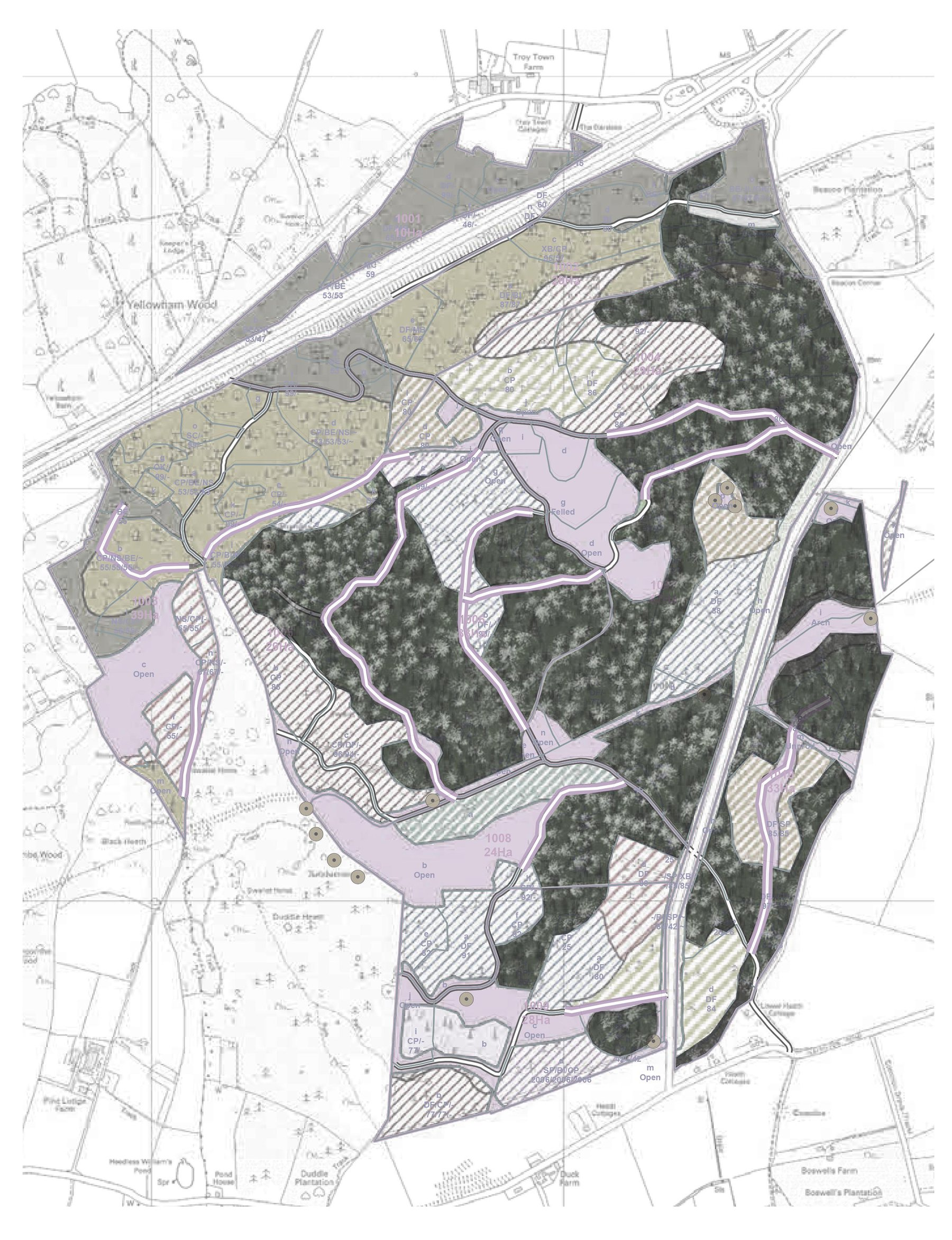 Morgan Davies, Puddletown Forest, A plan exploring the plantation methods found within on of the larger examples of forestry in Dorset. Here a generation approach to mix planting has resulted in a very broad ran.jpg