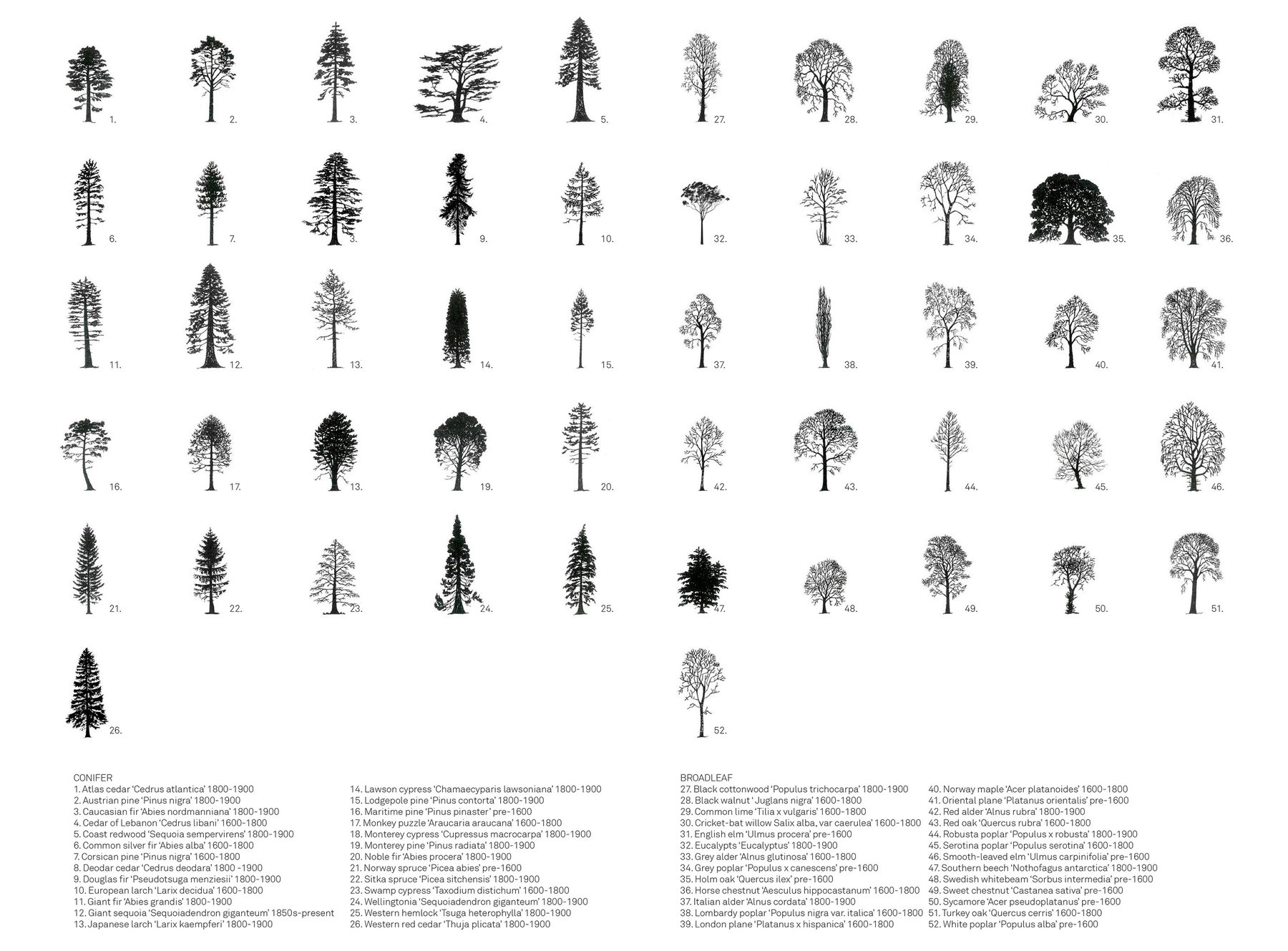 Morgan Davies Trees, 52 species of trees have been introduced to the UK throughout the last 500 years, used in ornamental gardens and timber production these exotic species have become an integral part of the En.jpg