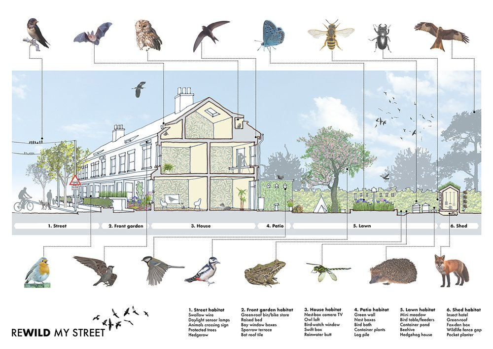 Sian Moxon_ Sectional Perspective of Rewilded Street i.jpg